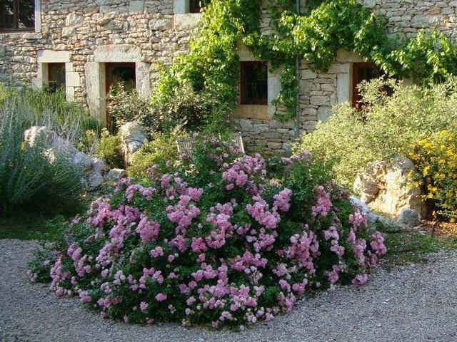 massif de fleurs roses