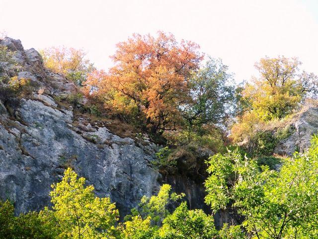 l'automne et la falaise au dessus d'Autoire