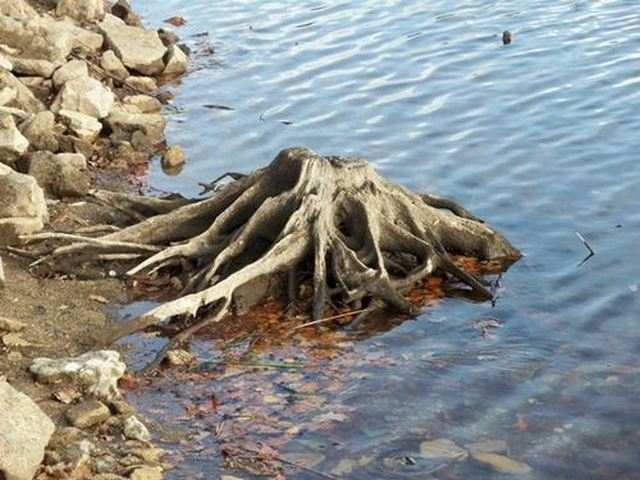 souche d'arbre les pieds dans l'eau