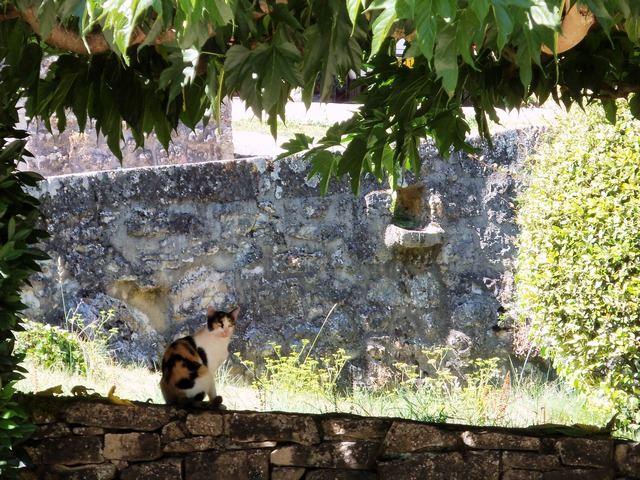 Détail murs faune Lot