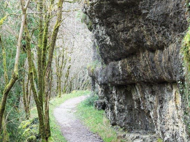 Chemin sous bois Lot