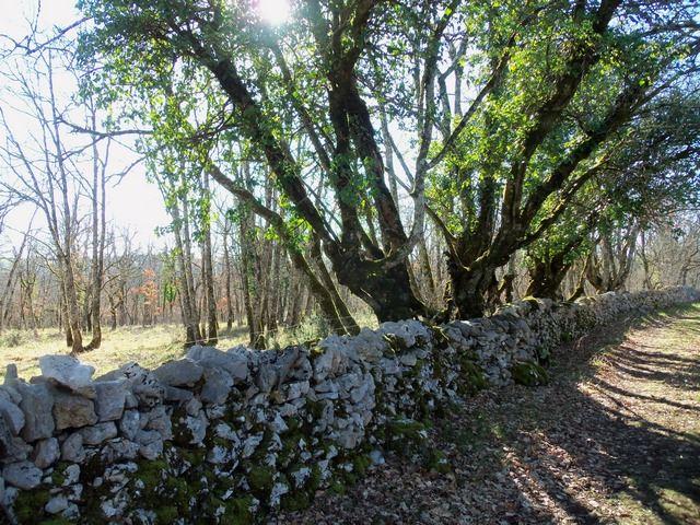 planagrèze mur en pierres sèches lot Occitanie